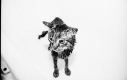 Cat 2.jpeg