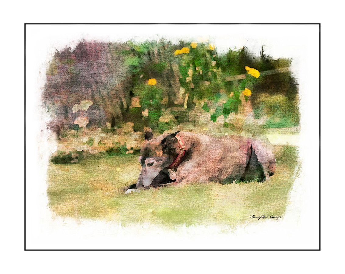 Watercolor Greyhound
