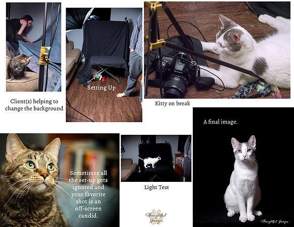 Behind the scenes kitties.jpg
