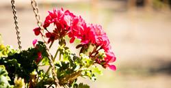 Flowers_1_1.jpg