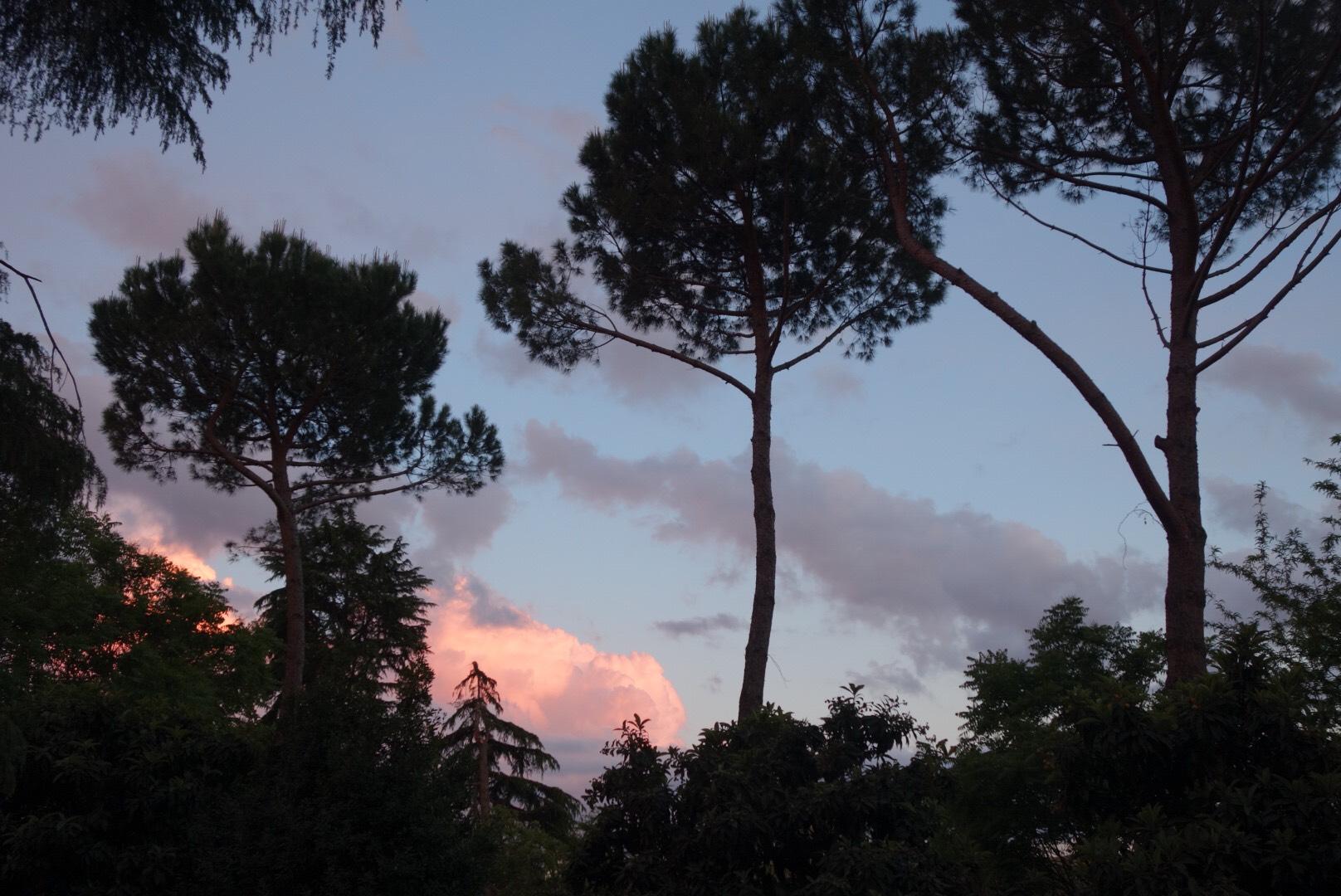 Foto pini e tramonto