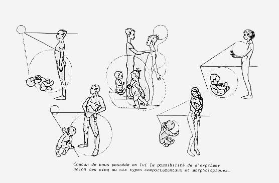 Imagem de GODELIEVE DENYS STRUYF. Fonte : Cadeias Musculares e Articulares - O Método G.D.S. São Paulo: Summus; 1995.