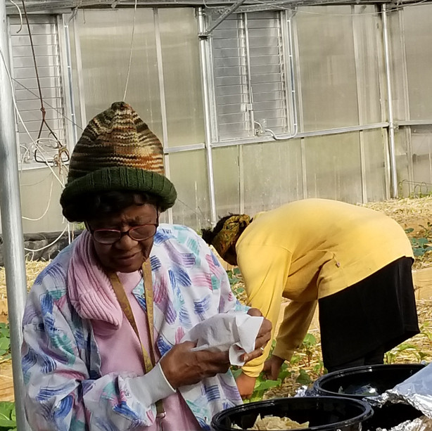 Working in Garden