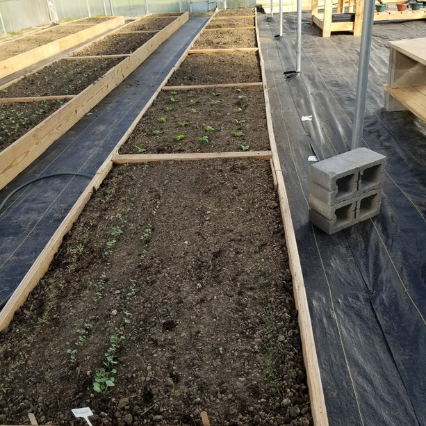 The Garden Build
