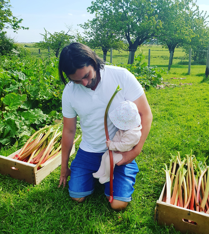 rhubarb, harvest, allotment, farm, children, cooking, recipes