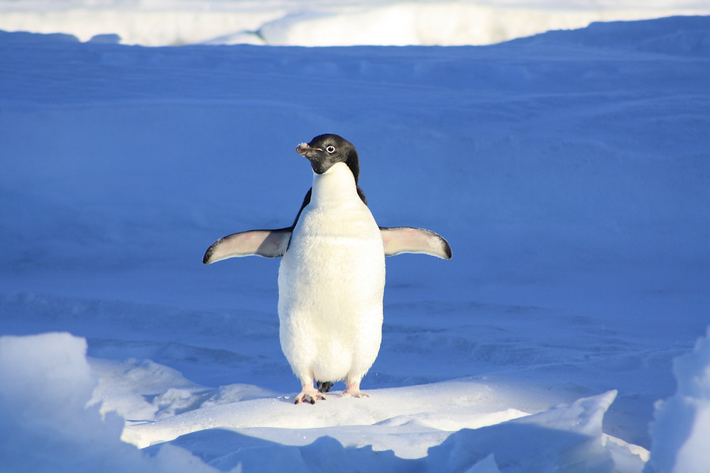 penguin, ice, cool