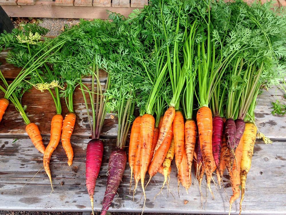 Carrot Top Pistachio Pesto