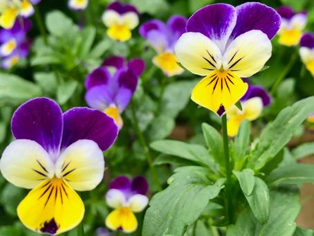 |   Jodi Del Ponte  |  Bloom Of The Month |   Admiration
