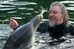 Dolphins - Things We Learn While Traveling #5