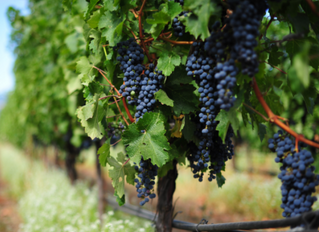 Terroir - Things We Learn While Traveling #3