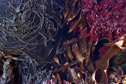 """""""Kaleidoscopic Seaweed"""""""
