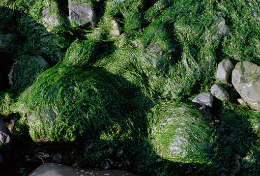 """Seaweed & Rocks"""