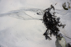 """""""Seaweed & Sand"""""""
