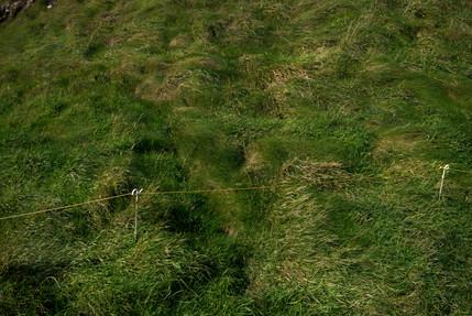 """""""Grass"""""""