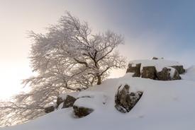 arbres_DSC5188.jpg