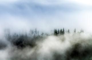 art-arbres-lac-blanc-D.jpg