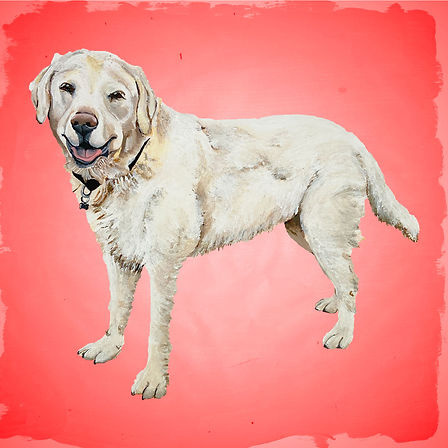Ed's-Dog-Red-Insta.jpg