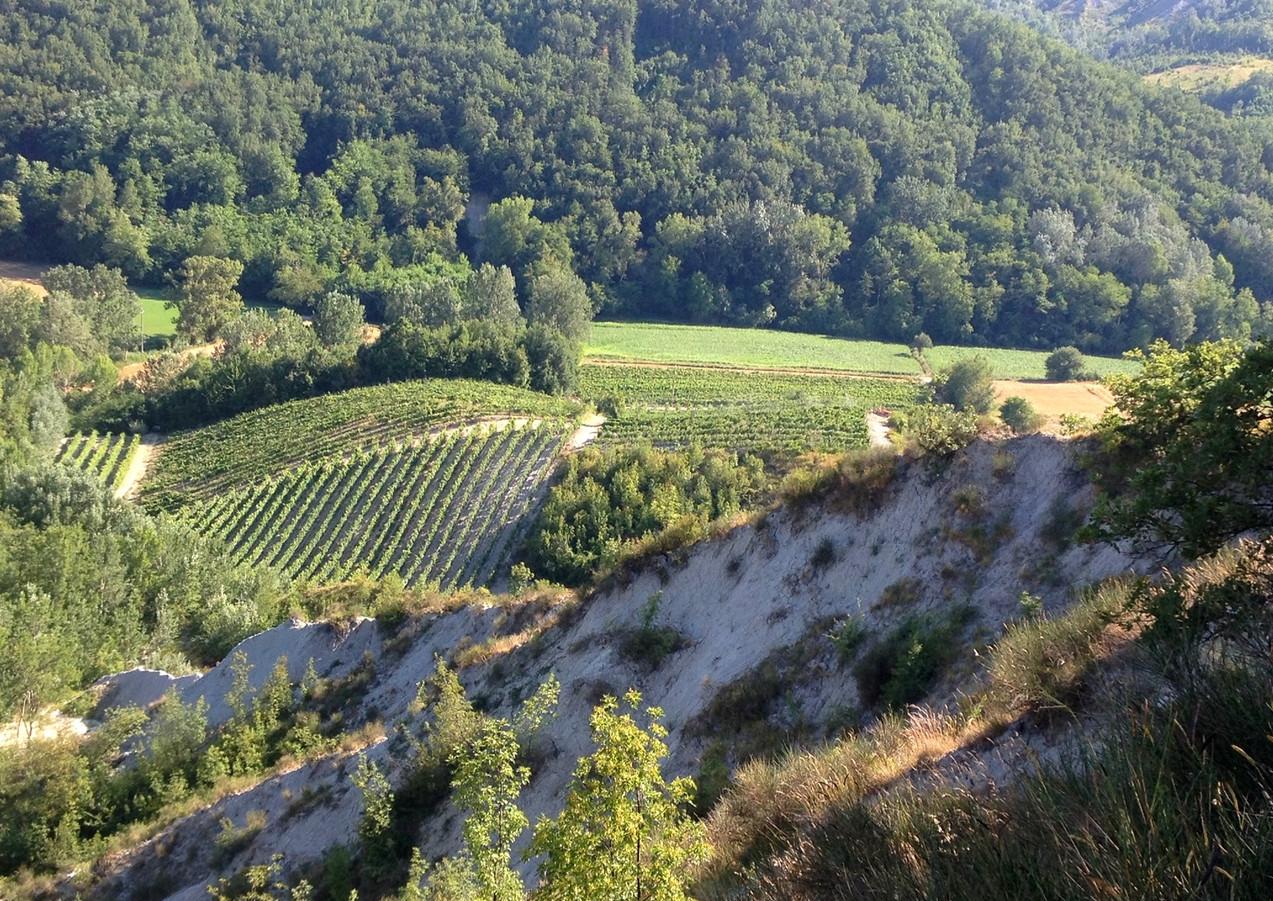 Terre di Sarizzola - Colli Tortonesi