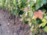 Terre di Sarizzola - Salumi e vini