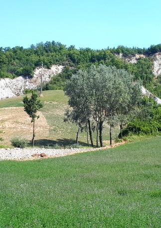 Terre di Sarizzola - pratone
