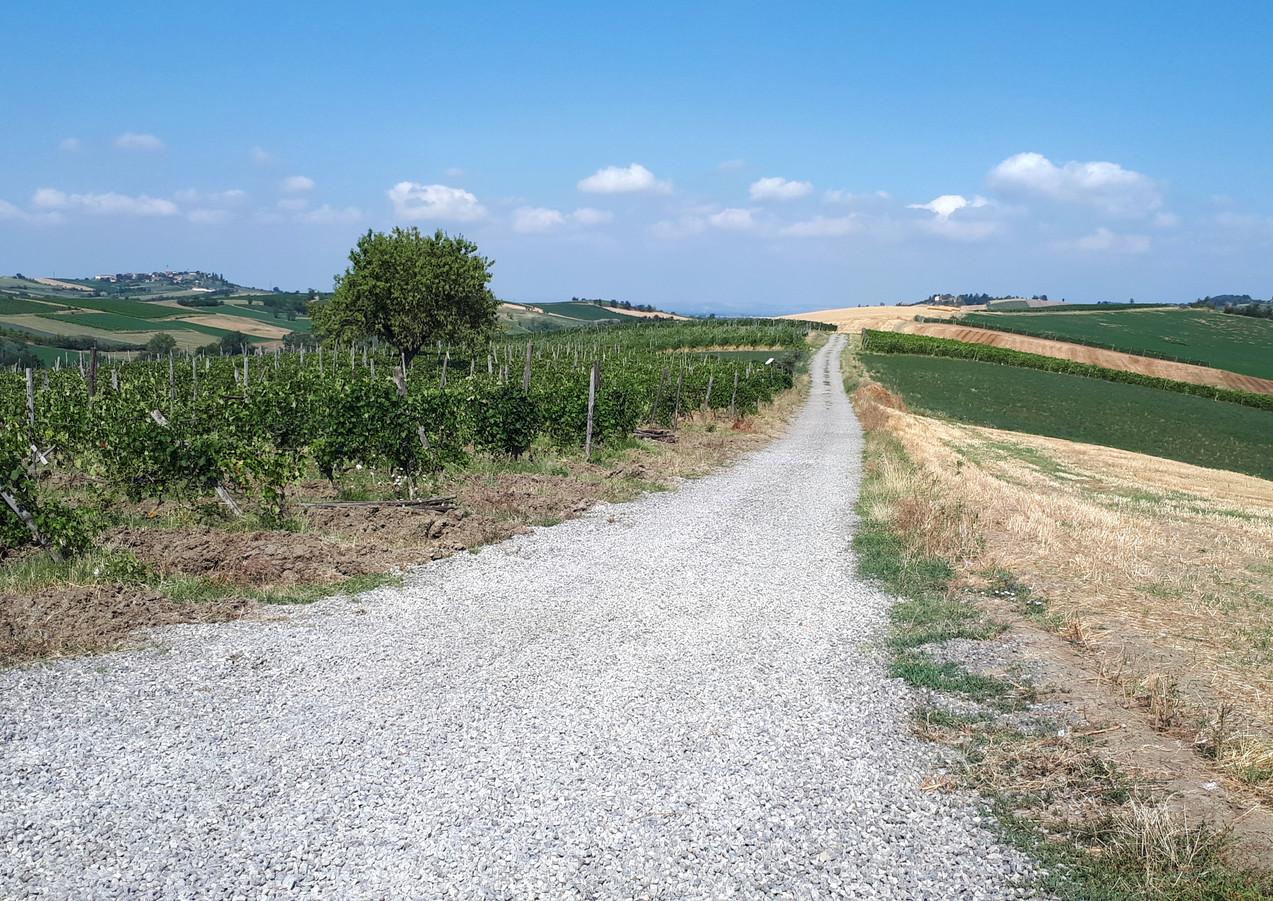 Terre di Sarizzola - strada nei campi