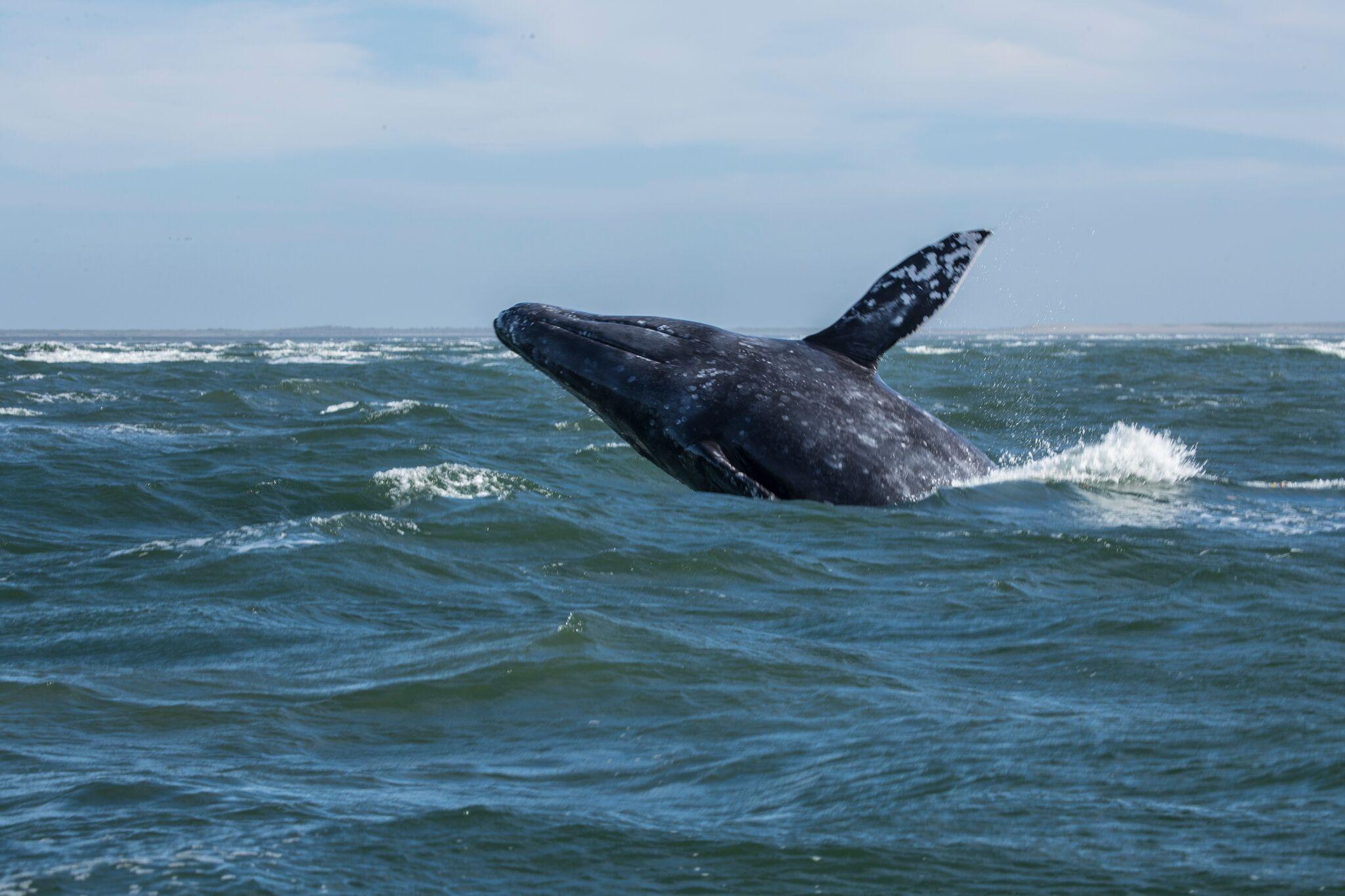 2022 Whale Adventure