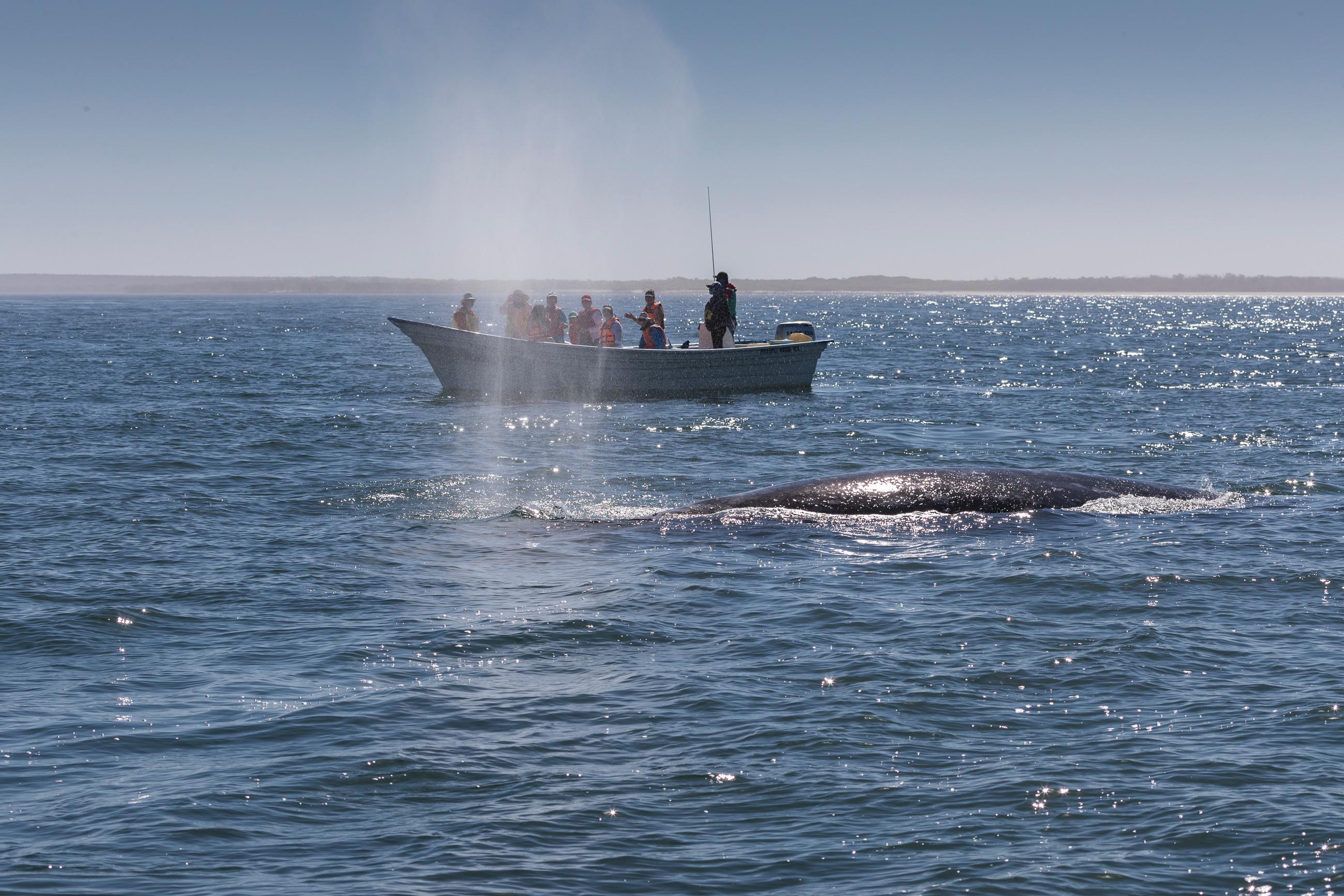 2020 Whale Watching Rejuvenation Retreat