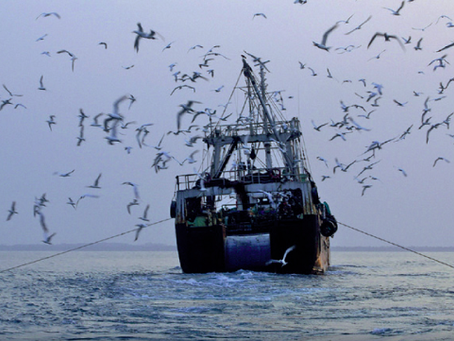 Marine Heatwaves Will Increase Climate's Effect on Fisheries