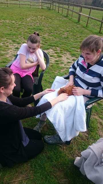 Hugs and strokes for Lola the Guinea Pig