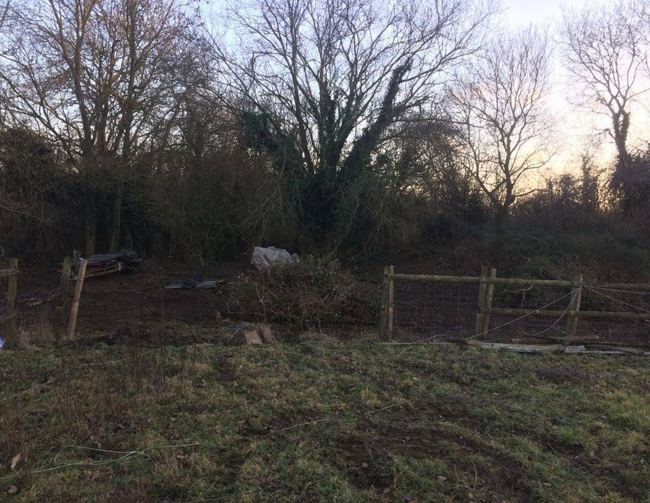 Clearance of our woodland area