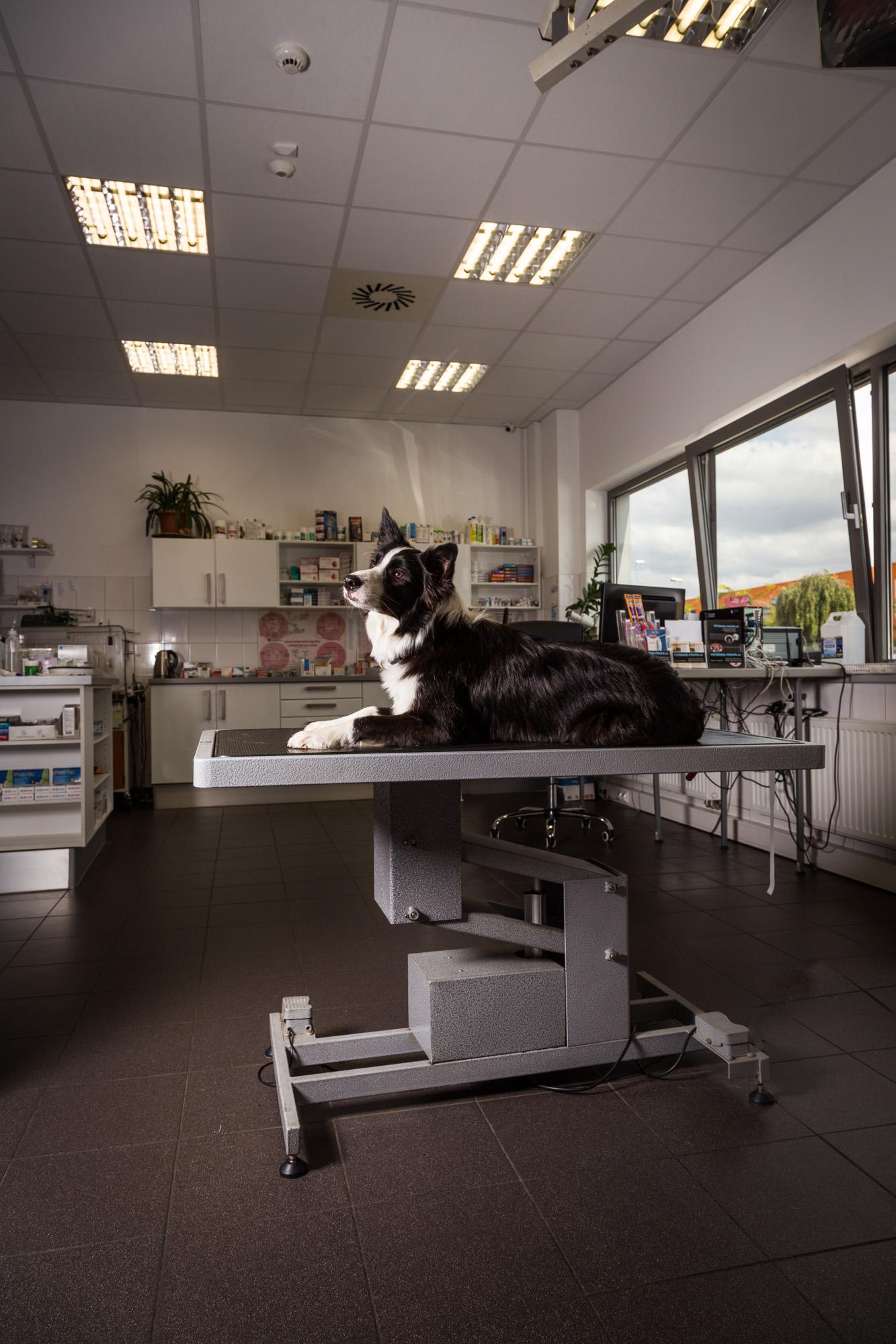 Veterinární klinika Praha