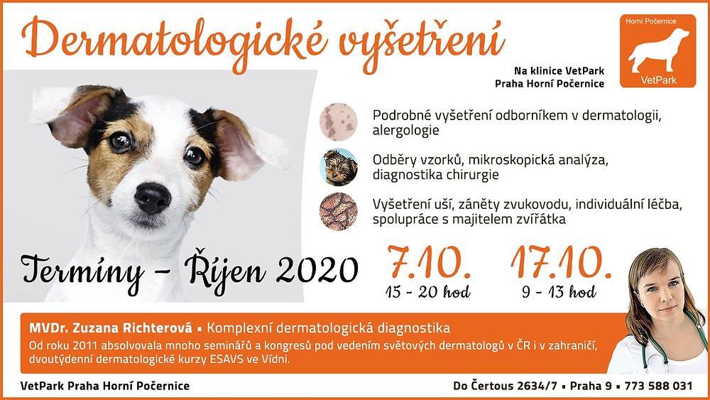 Dermatologická vyšetření psů a koček