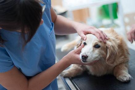 veterinární klinika brandýs