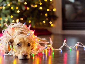 Vánoční sbírka pro zvířata v nouzi