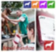 Veterinární krevní transfuze