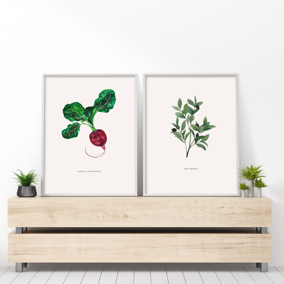 Botanical Olive_Vintage Botanicals_v2.pn