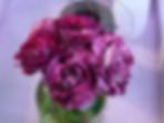 Purple-Tiger-Rose
