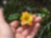 Pur-Caprice-Rose