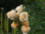 parfum-de-mireille-rose