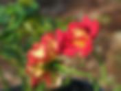 ketchup-mustard-rose