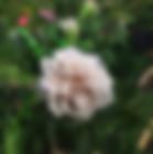 Grey-Pearl-Rose