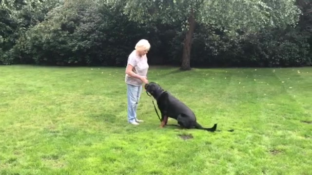 Alfie Training 3