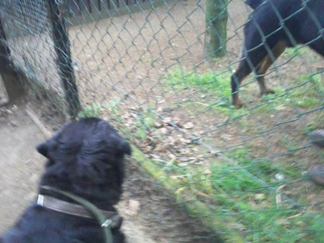 Norman and Dave.....1st meeting through the fence