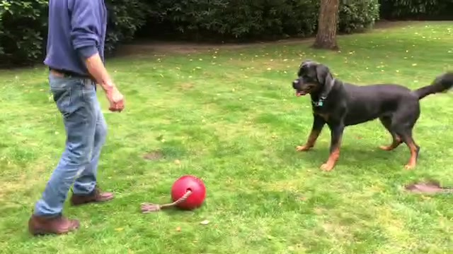 Alfie playing ball