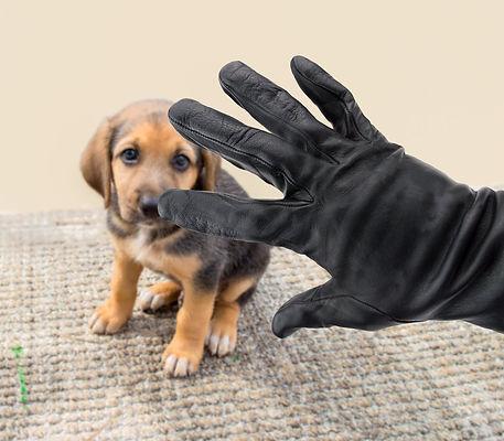 dog-theft.jpg