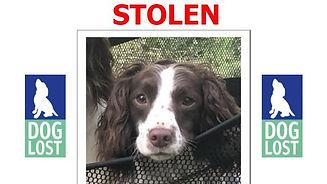 _114785798_stolendog.jpg