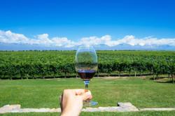 Vineyards (Mendoza, Argentina)