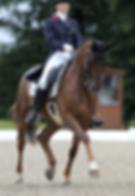 Equestrian Accesories