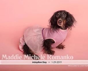 maddie adoption date.jpg