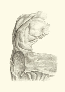 Belvedere torso back.jpg